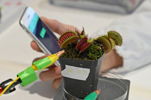 """""""Robots-plantes"""": des scientifiques cherchent à combiner technologie et nature"""