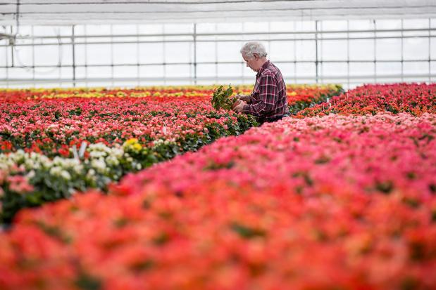 La crise de l'énergie aura aussi un impact sur l'horticulture sous serre