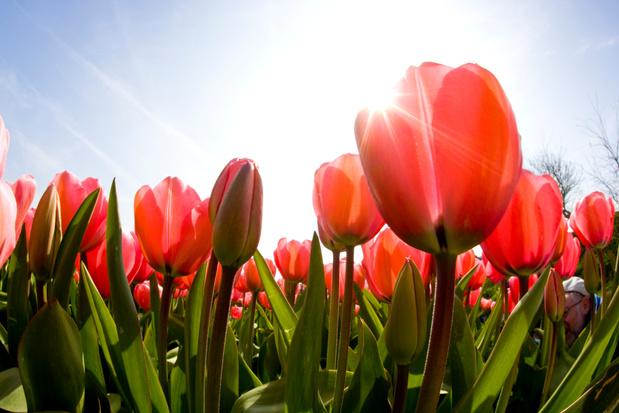 Marie Poppies, des fleurs écoresponsables bien de chez nous