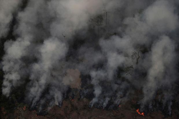 Bolsonaro verbiedt kappen en verbranden ten behoeve van de landbouw