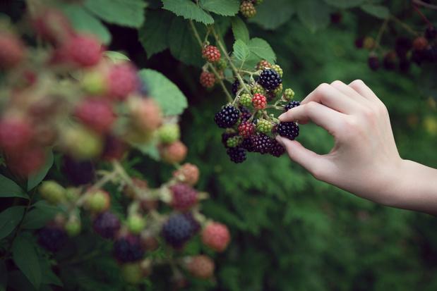 Zo plant je een eetbare plukroute in jouw gemeente