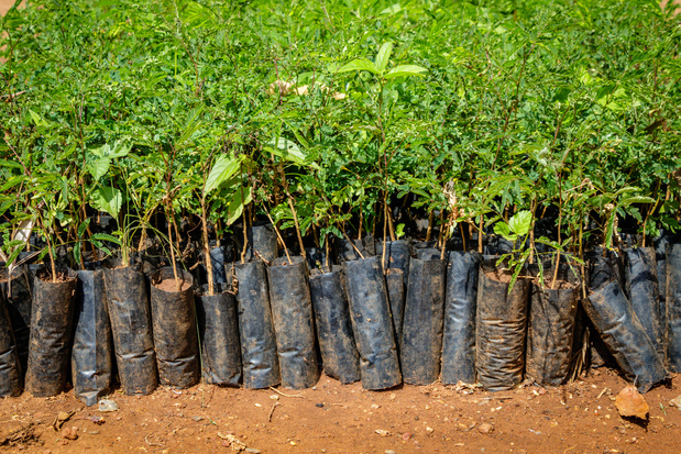 Timberland plant vijftig miljoen bomen