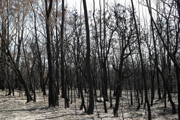 """""""Sans précédent"""": les incendies en Australie ont détruit 20% des forêts"""