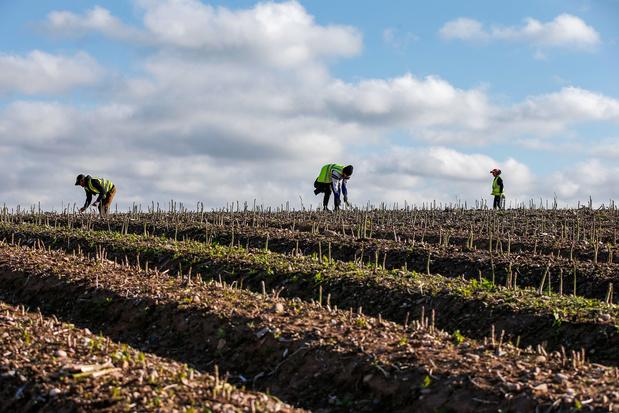 Opnieuw extra helpers gezocht voor oogstseizoen