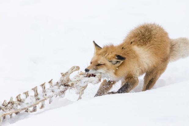 Mozilla corrige des bugs dans Firefox 77