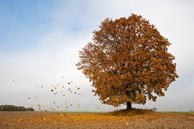 Het vallen van de bladeren