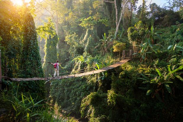 Amper een derde van de regenwouden nog intact