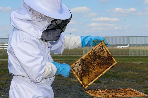 Année noire pour les apiculteurs européens; la Wallonie épargnée
