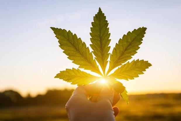 Le cannabis est lié à un risque doublé d'infarctus chez les jeunes adultes