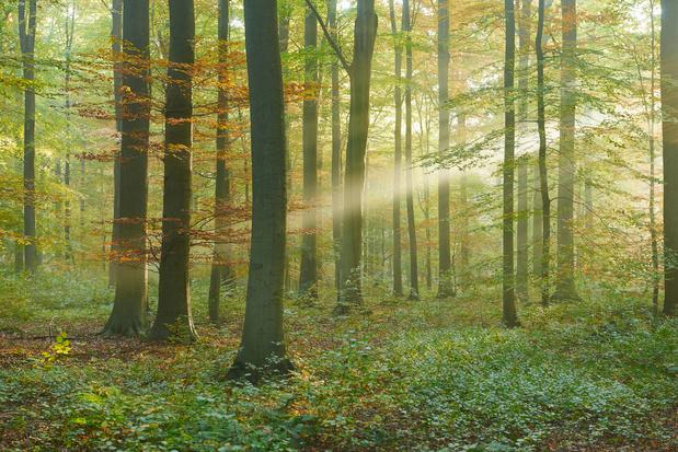 Groen roept Belgen op om natuur in eigen streek in kaart te brengen