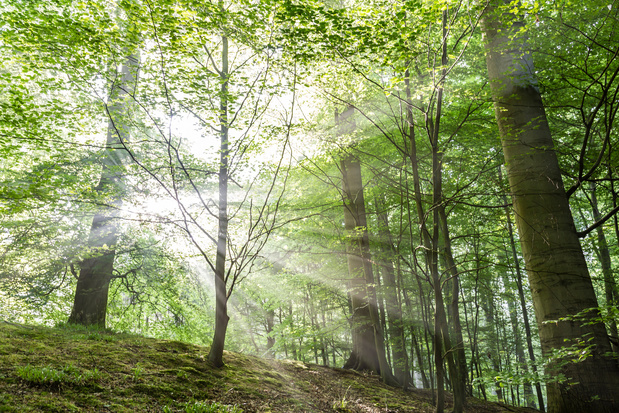 Groene rand rond Zoniëwoud wordt een groot natuurgebied