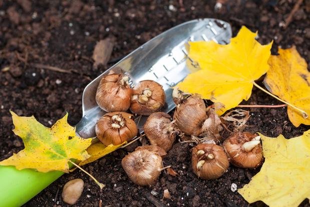 5 conseils pour réussir ses plantations d'automne