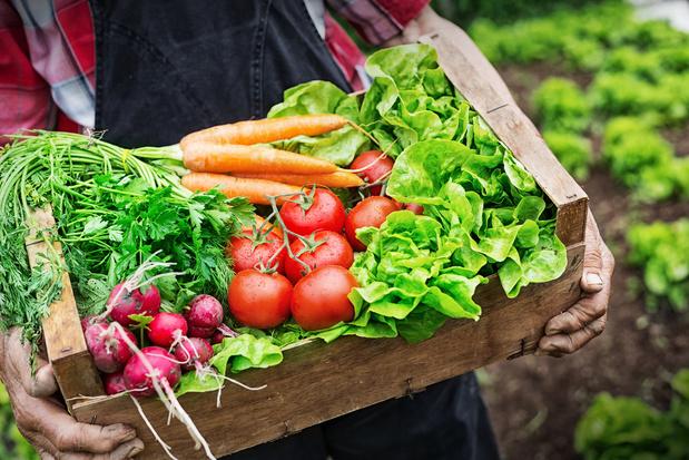 Meer inzetten op lokaal voedselbeleid in Vlaanderen