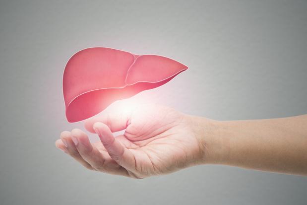 Le foie, un organe absolument vital