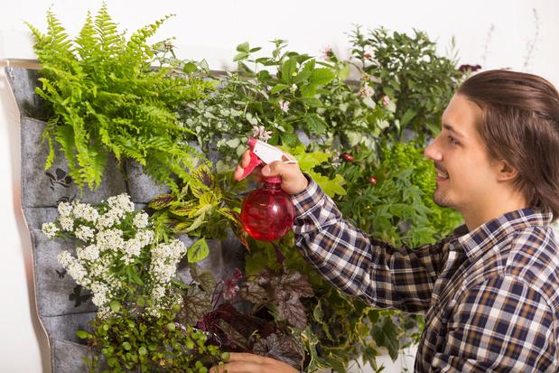 4 conseils pour créer son jardin d'intérieur