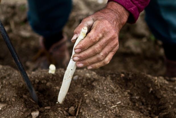 Applaus voor de handen achter ons eten: campagne wakkert trots op Vlaamse boeren aan