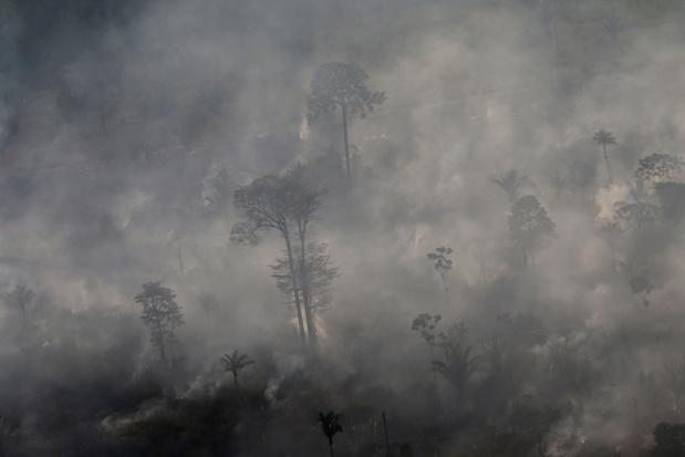 Brésil: hausse de 30% des incendies de forêt en Amazonie en 2019