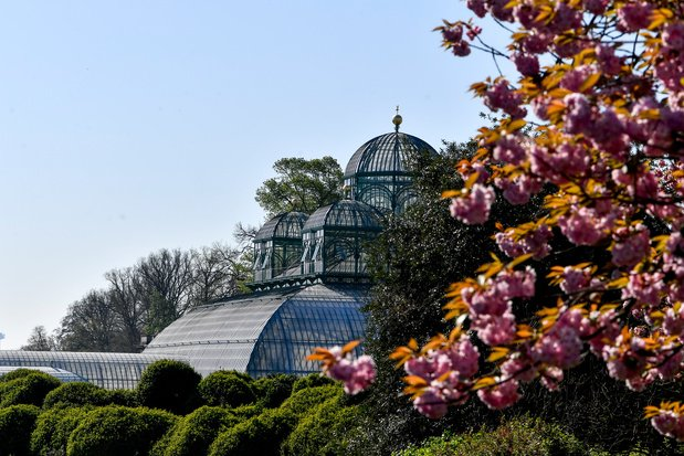 En mai, visitez les Serres royales de Laeken