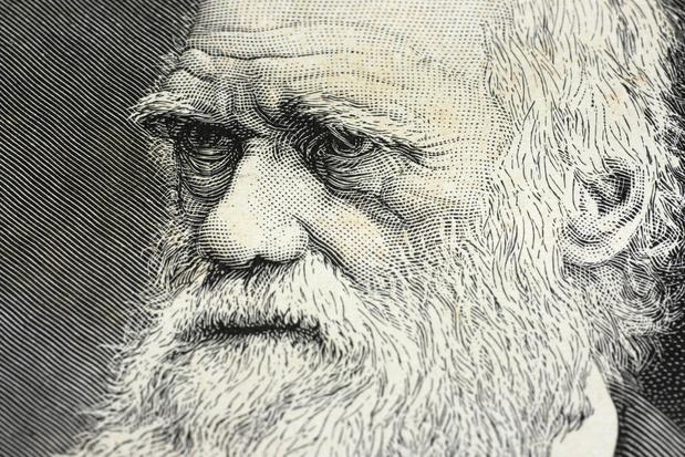Le retour de Darwin en économie
