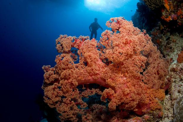Wetenschappers willen Great Barrier Reef beschermen met wolken
