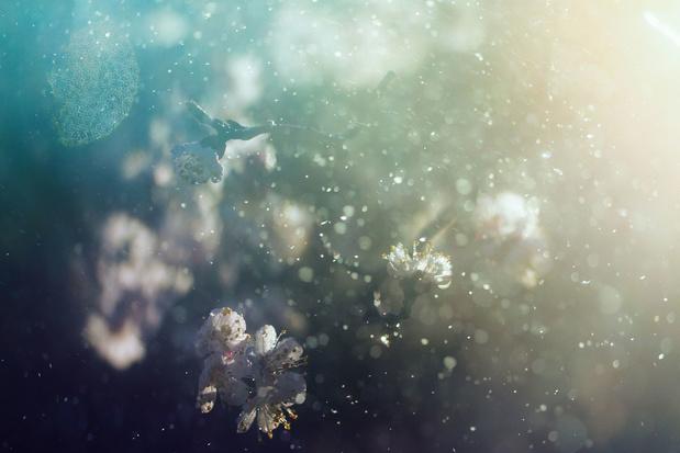 Gare au pollen ! Il augmenterait le taux d'infection au coronavirus