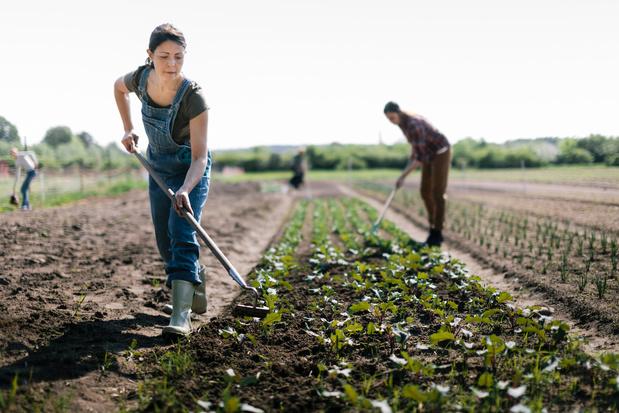 Wetenschappers formuleren tien voorstellen om Europees landbouwbeleid duurzamer te maken