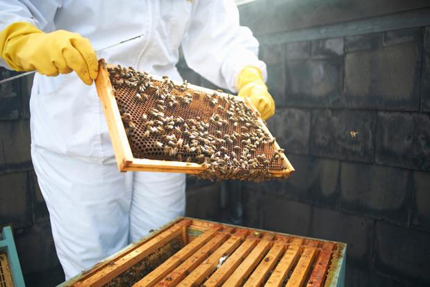 Berlin, un paradis pour les abeilles, vraiment ?