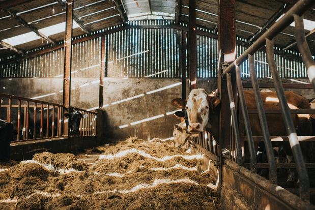 Een Belgische stal