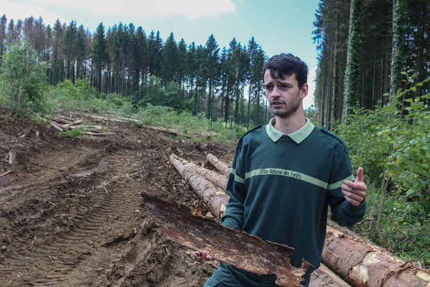 Les plantations intensives d'épicéas en Wallonie ont-elles aggravé les inondations en Wallonie ?