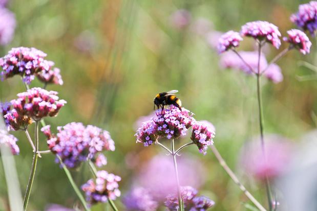 Waarom ontharding ook voor bijen van levensbelang is: Week van de Bij van start