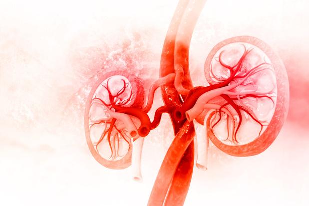Les patients transplantés rénaux sont à haut risque de Covid-19 mortel