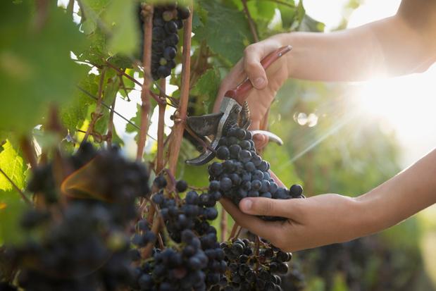 Les vignerons wallons s'exposent à Mons