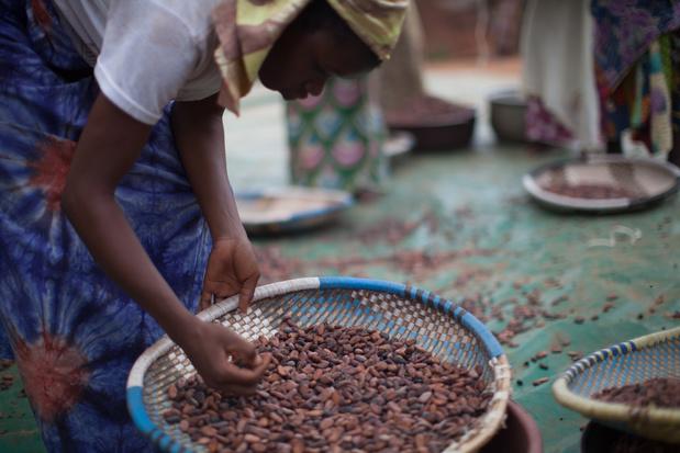 Bedrijven blijven structurele problemen in cacaosector negeren