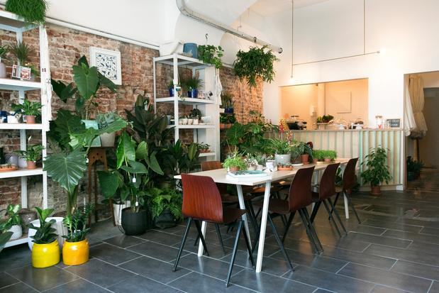 Brusselse plantenwinkel GRUUN viert eerste verjaardag met stekjesruil