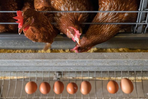 1,5 miljoen Europeanen willen geen landbouwdieren meer in kooien