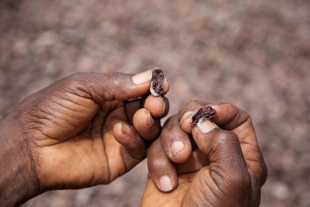 Tony's Chocolonely berekent ideale prijs voor cacao (en roept concurrenten op die ook te betalen)