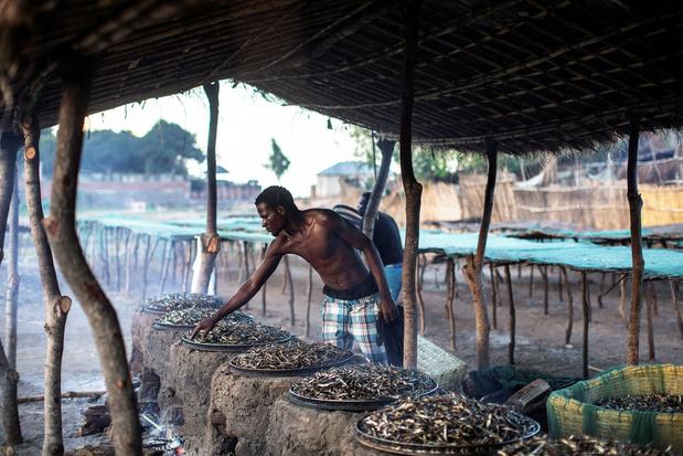 La fragile économie du lac Malawi, victime du climat et de la surpêche (en images)