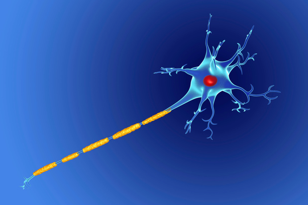 Sclérose en plaques : le rôle d'une protéine d'enveloppe mis en lumière