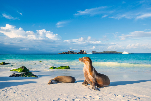 Geheim achter uniek ecosysteem Galapagoseilanden ontdekt