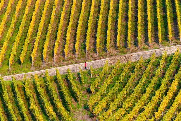 Frankrijk verwacht dit jaar minder wijn te produceren