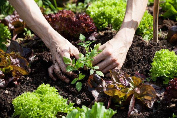 Les principes de la permaculture, un jardin potager respectueux de la nature et de ses habitants