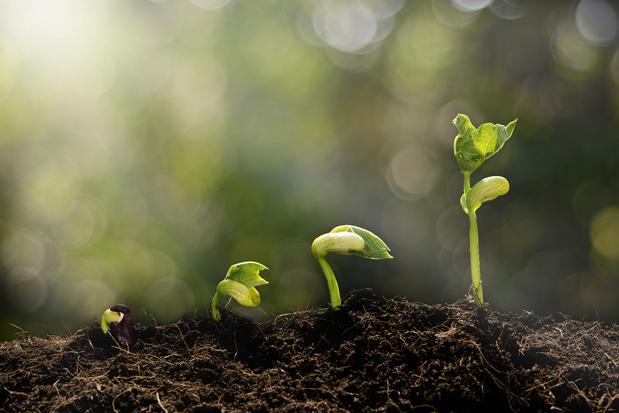 Bomen helpen planten kan nu ook via je smartphone