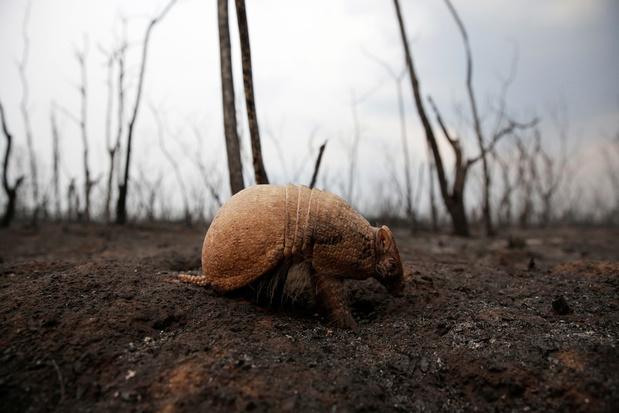 Ook Bolivia brandt: 'drie keer oppervlakte van Vlaanderen in de as'