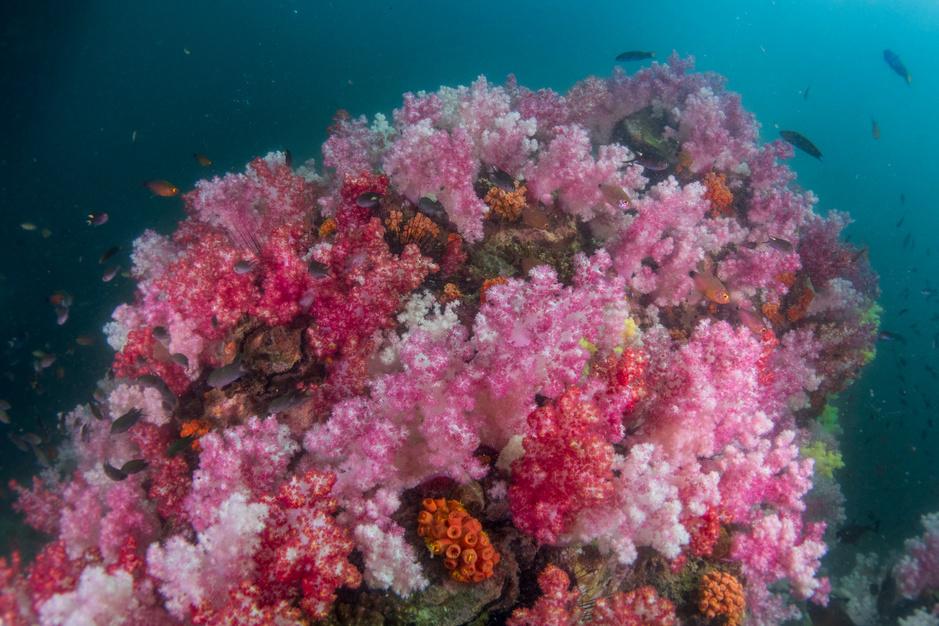 Vrouwen en jongeren nemen herstel Keniaans koraalrif in handen