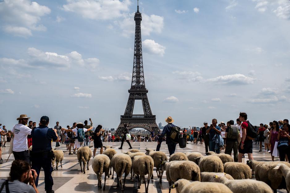 En images: Le tour du Grand Paris à hauteur de brebis