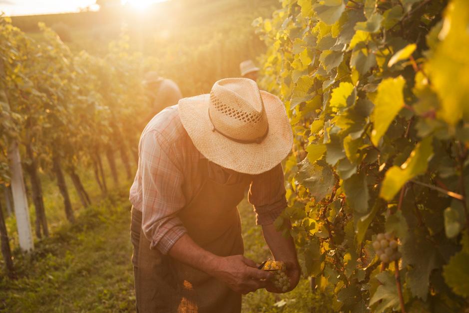 Wijngebieden moeten snel schakelen om te overleven