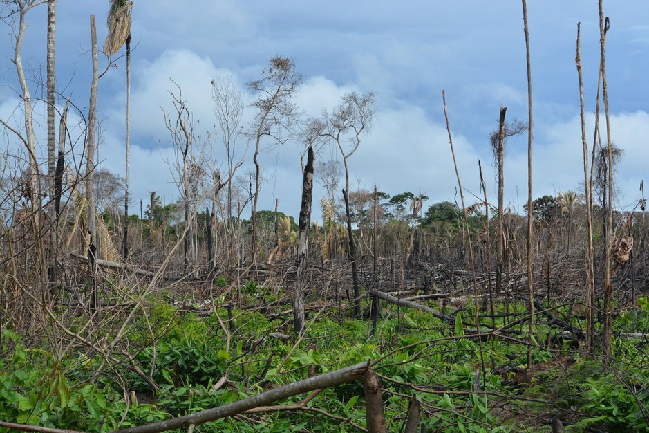 Vrede kan de natuur ernstige schade toebrengen