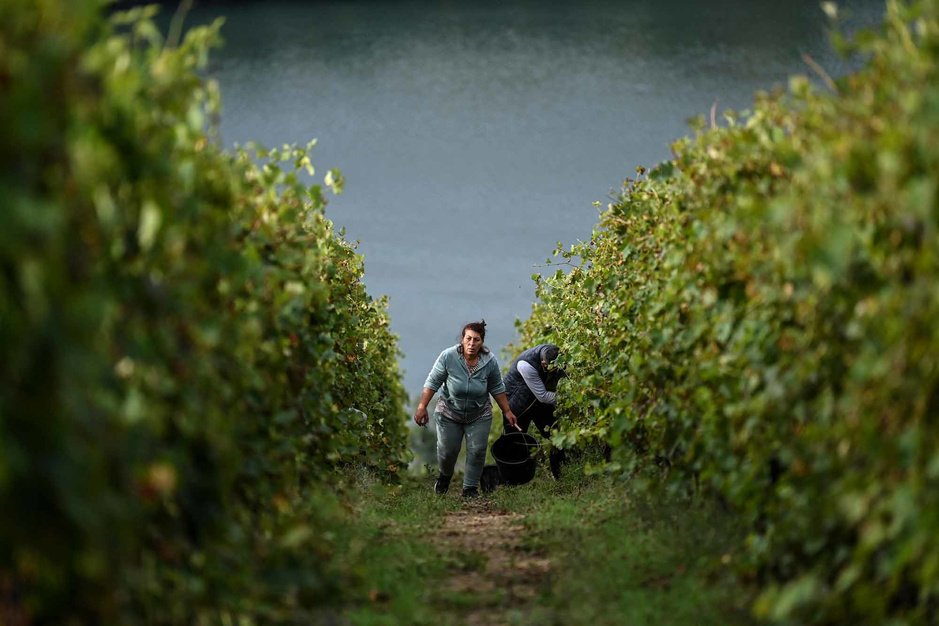 Vin: Bientôt une 18e appellation des Côtes-du-Rhône? (en images)