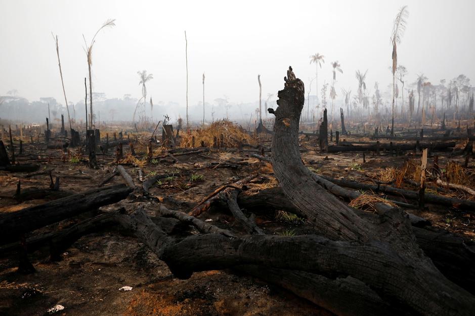Draagt Belgisch vlees bij aan de bosbranden in de Amazone?