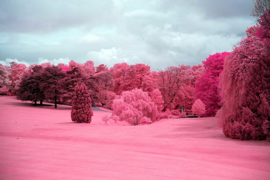 In beeld: het roze universum van fotograaf Lars Moereels